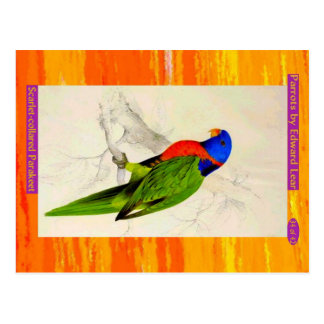 Edward Lear. Scarlet-collared Parakeet. Postcard