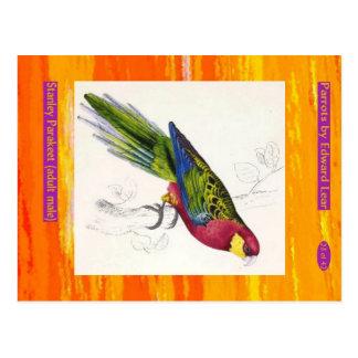 Edward Lear. Stanley Parakeet. Adult male. Postcard
