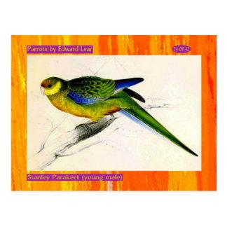 Edward Lear. Stanley Parakeet. Young male. Postcard