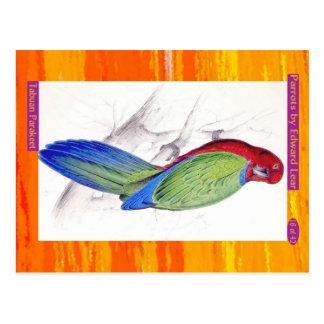 Edward Lear. Tabuan Parakeet. Postcard