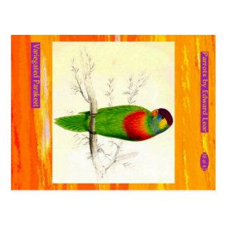 Edward Lear. Variegated Parakeet. Postcard