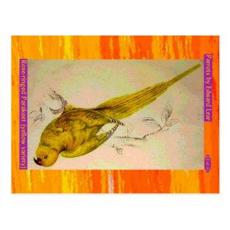Edward Lear. Yellow Rose-ringed Parakeet. Postcard