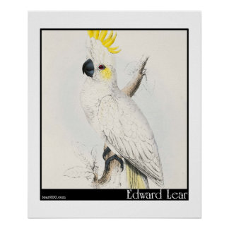 Edward Lear's Lesser Sulphur-Crested Cockatoo Poster