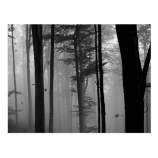 EERIE FOREST TREES LEAVES B&W POSTCARD
