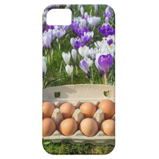 Egg box with chicken eggs in crocuses case for the iPhone 5