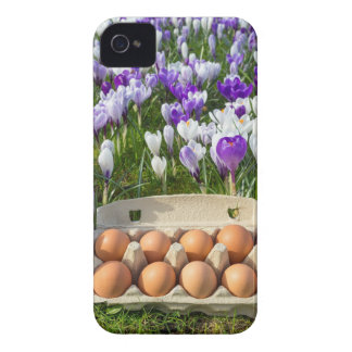 Egg box with chicken eggs in crocuses iPhone 4 Case-Mate case