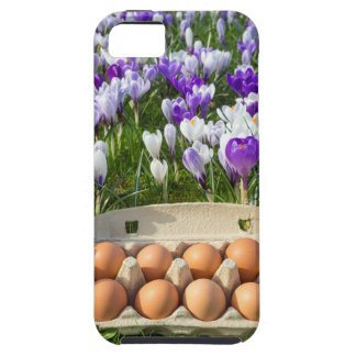 Egg box with chicken eggs in crocuses iPhone 5 cover