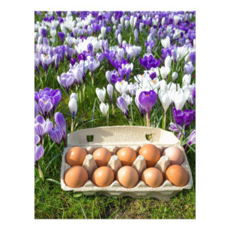 Egg box with chicken eggs in crocuses letterhead