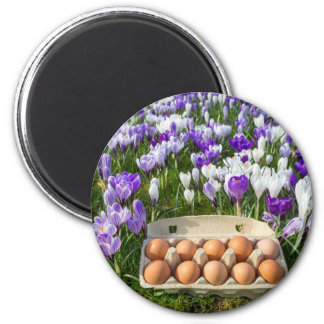 Egg box with chicken eggs in crocuses magnet