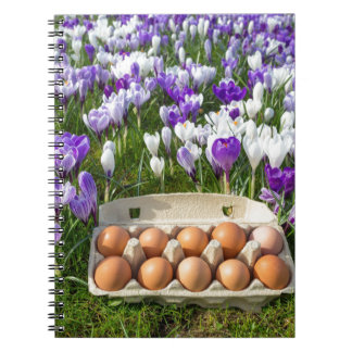 Egg box with chicken eggs in crocuses notebook