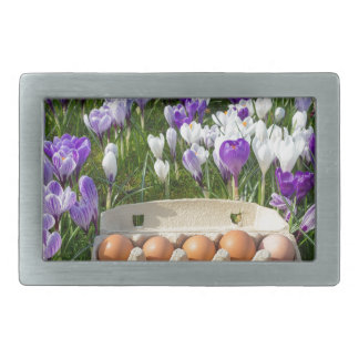 Egg box with chicken eggs in crocuses rectangular belt buckles