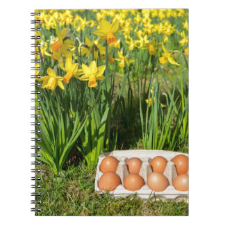 Eggs in box on grass with yellow daffodils note book
