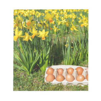 Eggs in box on grass with yellow daffodils notepad