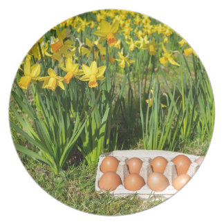 Eggs in box on grass with yellow daffodils plate