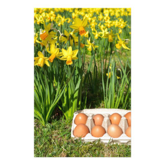 Eggs in box on grass with yellow daffodils stationery