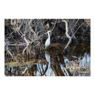 Egret in Louisiana Bayou - Poster