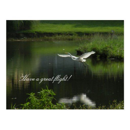 Egret in Travel Agent Thank You  Postcard