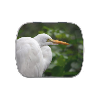 Egret looking right against green c bird
