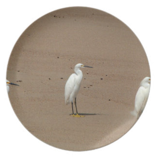 Egrets Loitering on Beach Party Plates