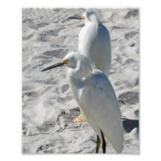Egrets on Beach Photo Print