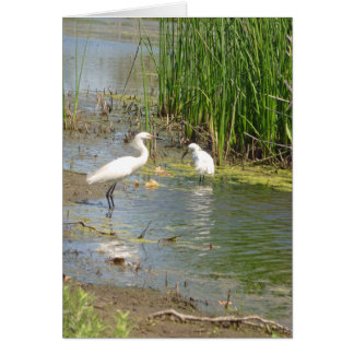 Egrets standing in pond card