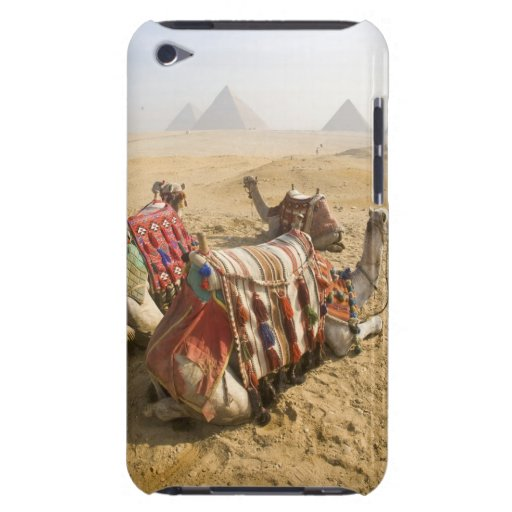 Egypt, Cairo. Resting camels gaze across the 2 iPod Touch Covers