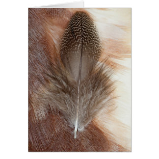 Egyptian Goose Feather Still Life Card
