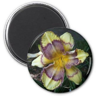 Egyptian Markings Daylily Hybird Magnet