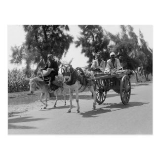 Egyptians with Carts and Donkeys circa 1934 Postcard