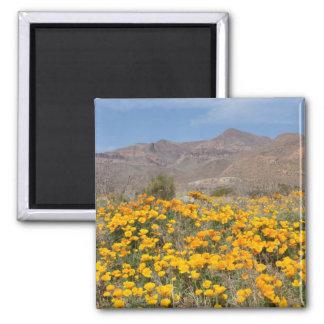 El Paso Poppies Magnet