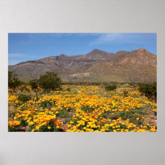 El Paso Poppies Poster