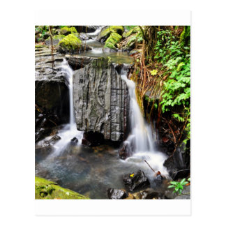 El Yunque Waterfall Postcard