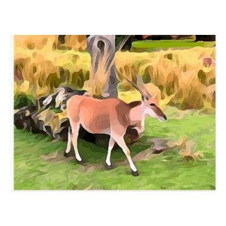 Eland Antelope from Safari Postcard