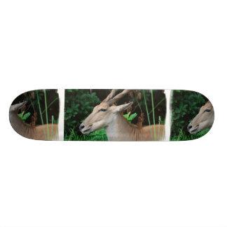 Eland Skateboard