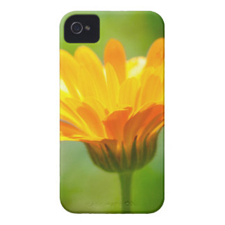 Elation Case-Mate iPhone 4 Case