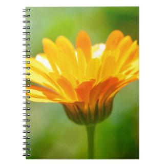 Elation Notebook