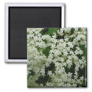Elderberry Blossoms Magnet