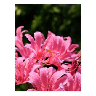Electric Surprise Lilies Postcard