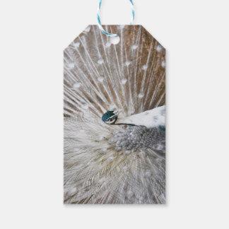 Elegant Albino Peacock Gift Tags