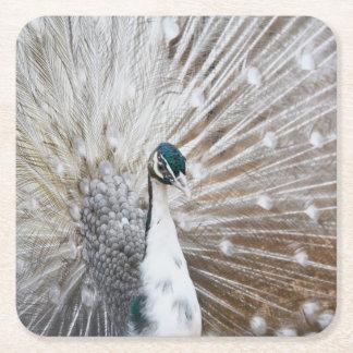 Elegant Albino Peacock Square Paper Coaster