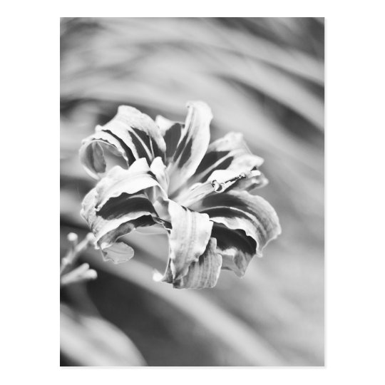 Elegant Black and White Flower Photography Postcard
