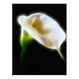 Elegant Calla Lily Flowers 3 Modern Postcard
