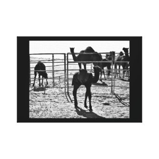 Elegant Camel Canvas Print