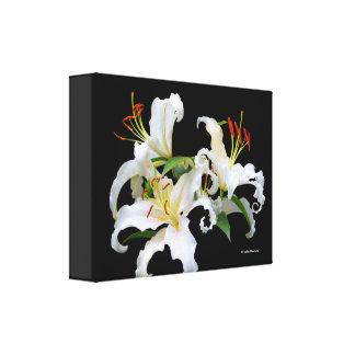 Elegant Casablanca White Oriental Lilies Canvas Print