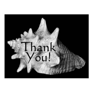 Elegant Conch Shell Beach Black, White Thank You Postcard