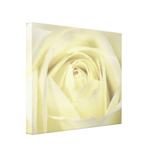 Elegant Cream Rose Wall Canvas Stretched Canvas Print