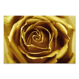 Elegant Golden Rose Photo Print