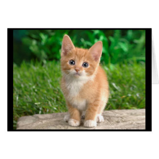 Elegant Kitty Notecard