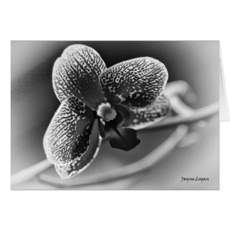Elegant Orchid notecard Card, black & white