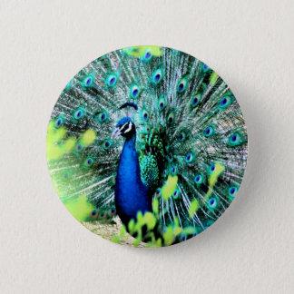 Elegant Peacock 2 Inch Round Button